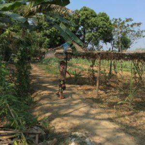 ミャンマー・EW州の農園